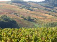 SALONS DES VINS de l'automne : Ne manquez pas le rendez-vous avec les Juliénas du Domaine Daniel Voluet !