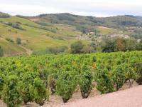 Superbe vendange pour ce CRU JULIENAS 2018  qui signe ma carrière viticole